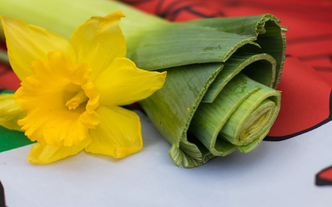 St. David's Day Dragons and Daffodils from Wales